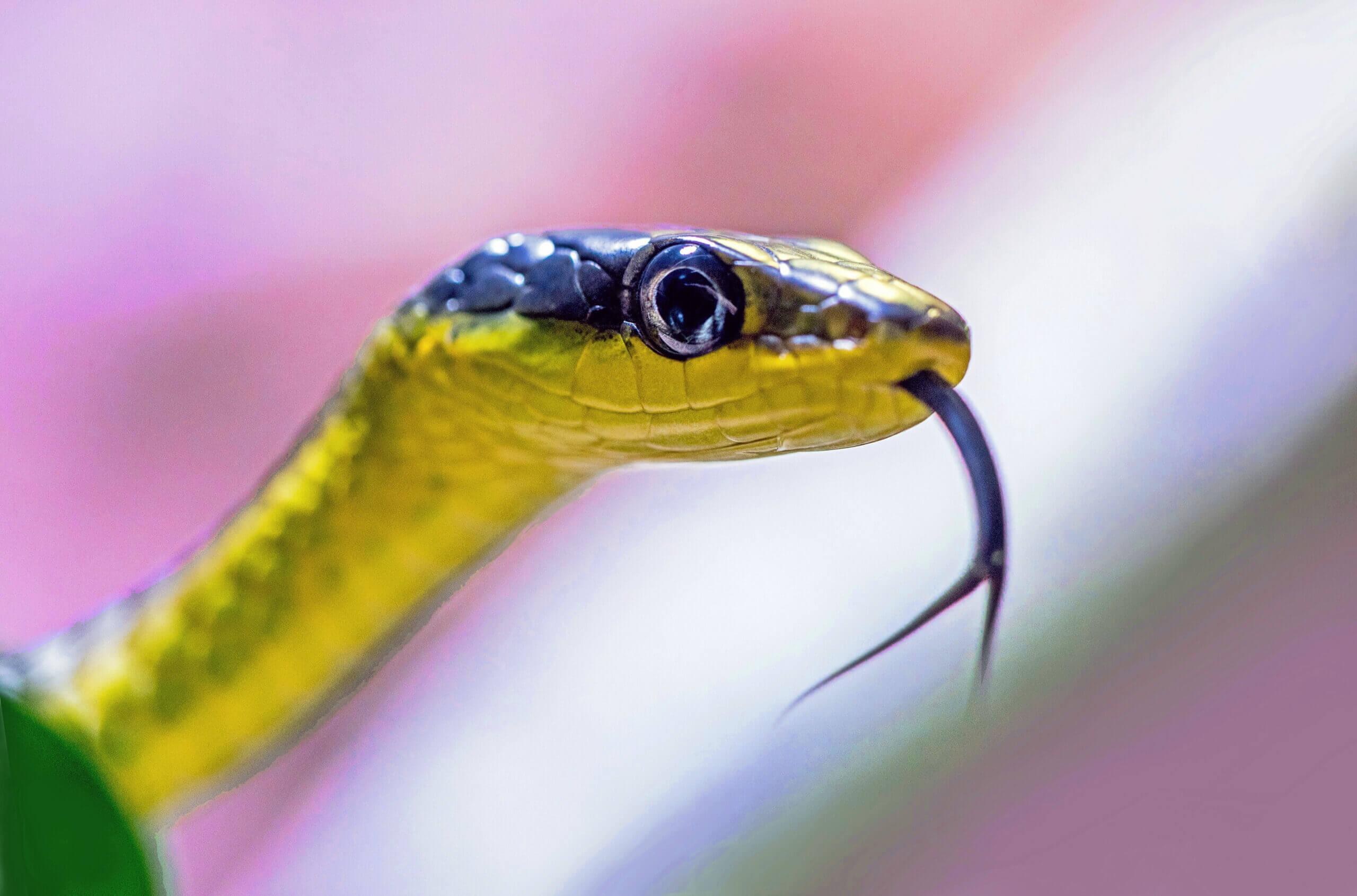 Die Schlangen sind an allem schuld
